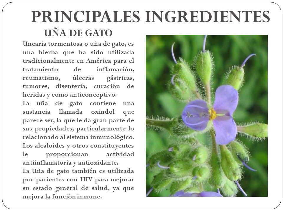 UÑA DE GATO Uncaria tormentosa o uña de gato, es una hierba que ha sido utilizada tradicionalmente en América para el tratamiento de inflamación, reum