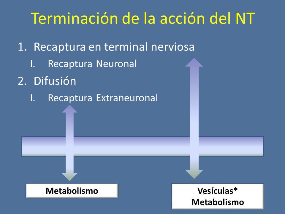 Terminación de la acción del NT 1.Recaptura en terminal nerviosa I.Recaptura Neuronal 2.Difusión I.Recaptura Extraneuronal MetabolismoVesículas* Metabolismo
