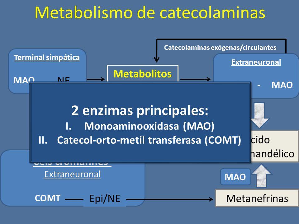 Metabolismo de catecolaminas Terminal simpática MAO NE Extraneuronal COMT - MAO Metabolitos intermedios Ácido vanililmandélico Cels cromafines- Extraneuronal COMT Epi/NE Metanefrinas Catecolaminas exógenas/circulantes MAO 2 enzimas principales: I.Monoaminooxidasa (MAO) II.Catecol-orto-metil transferasa (COMT) 2 enzimas principales: I.Monoaminooxidasa (MAO) II.Catecol-orto-metil transferasa (COMT)