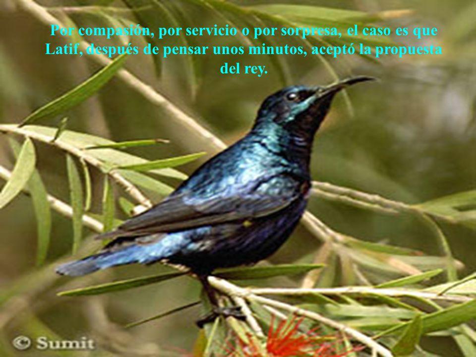 AdaliM Por compasión, por servicio o por sorpresa, el caso es que Latif, después de pensar unos minutos, aceptó la propuesta del rey.