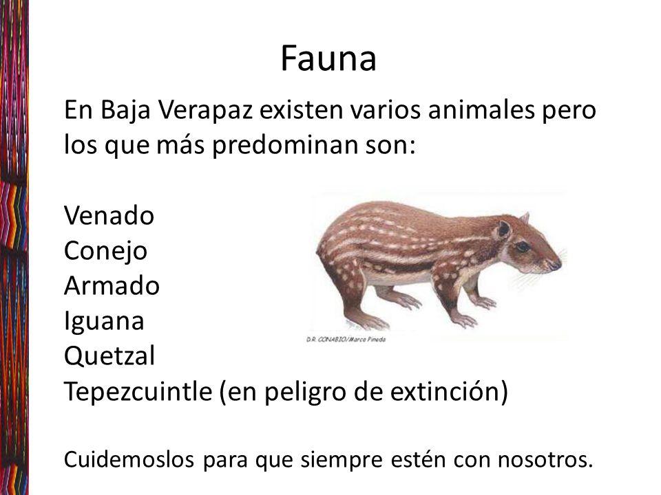 En Baja Verapaz existen varios animales pero los que más predominan son: Venado Conejo Armado Iguana Quetzal Tepezcuintle (en peligro de extinción) Cuidemoslos para que siempre estén con nosotros.