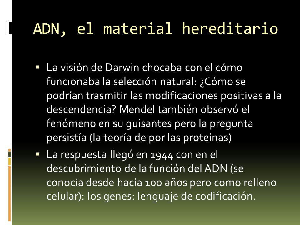 ADN, el material hereditario La visión de Darwin chocaba con el cómo funcionaba la selección natural: ¿Cómo se podrían trasmitir las modificaciones po
