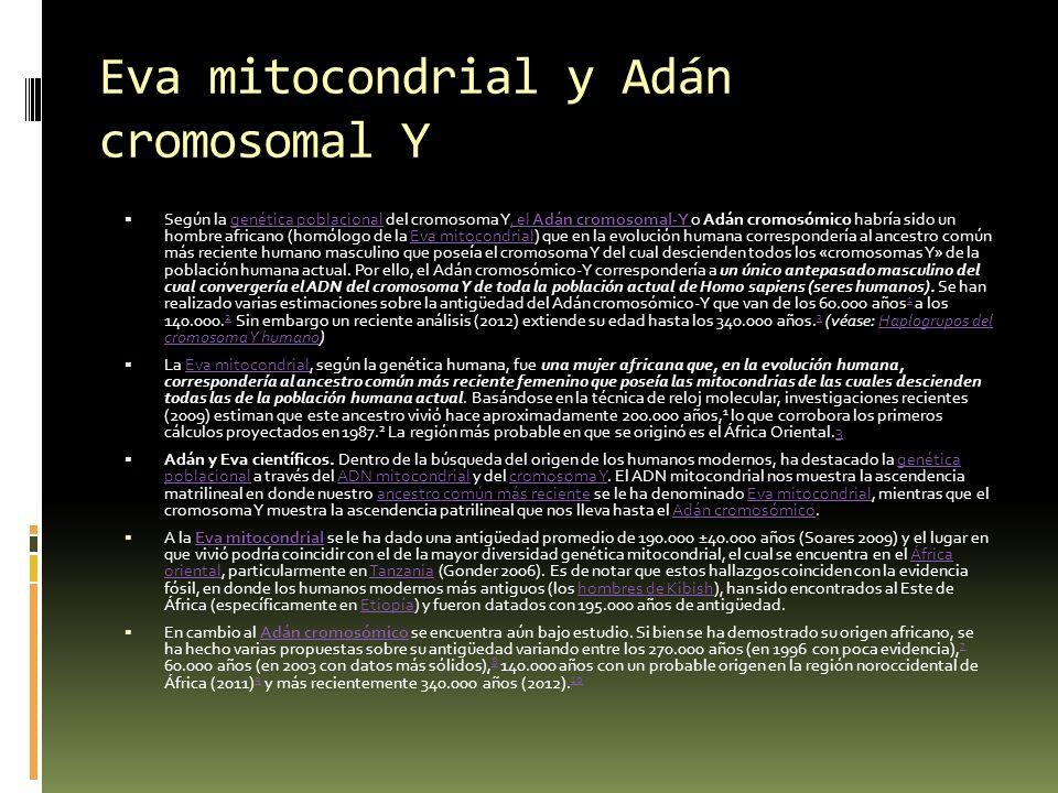 Eva mitocondrial y Adán cromosomal Y Según la genética poblacional del cromosoma Y, el Adán cromosomal-Y o Adán cromosómico habría sido un hombre afri