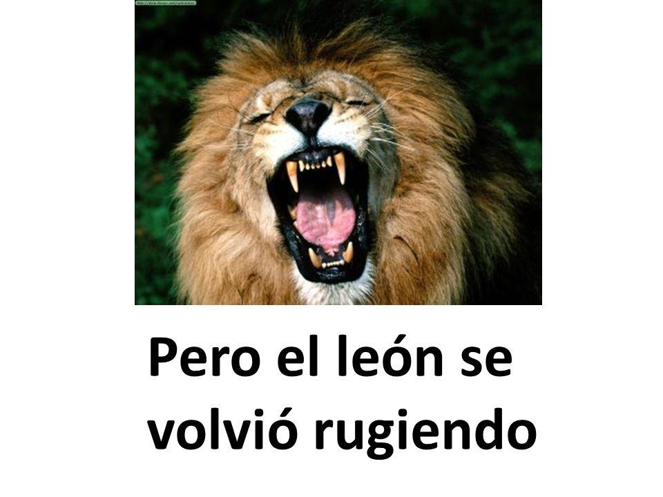 Pero el león se volvió rugiendo