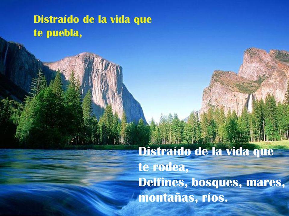 Distraído de la vida que te puebla, Distraído de la vida que te rodea, Delfines, bosques, mares, montañas, ríos.