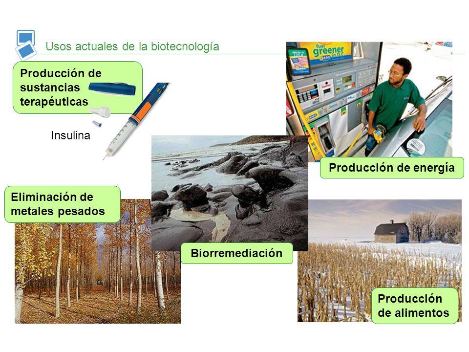 Usos actuales de la biotecnología Eliminación de metales pesados Producción de sustancias terapéuticas Insulina Biorremediación Producción de energía