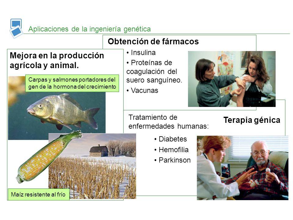 Terapia génica Aplicaciones de la ingeniería genética Obtención de fármacos Mejora en la producción agrícola y animal. Insulina Proteínas de coagulaci