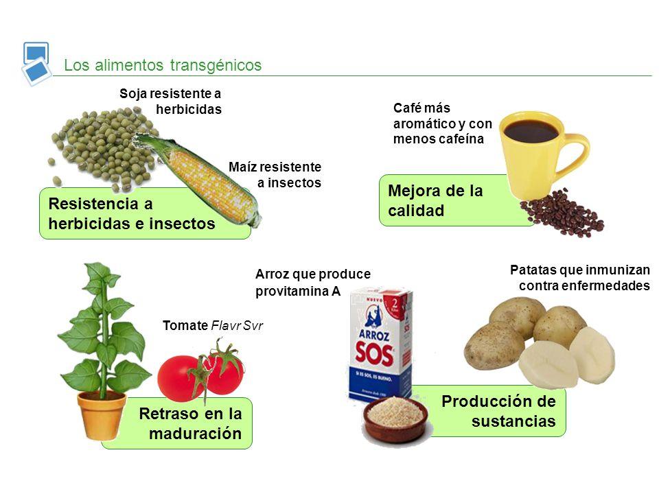 Retraso en la maduración Producción de sustancias Mejora de la calidad Los alimentos transgénicos Tomate Flavr Svr Café más aromático y con menos cafe