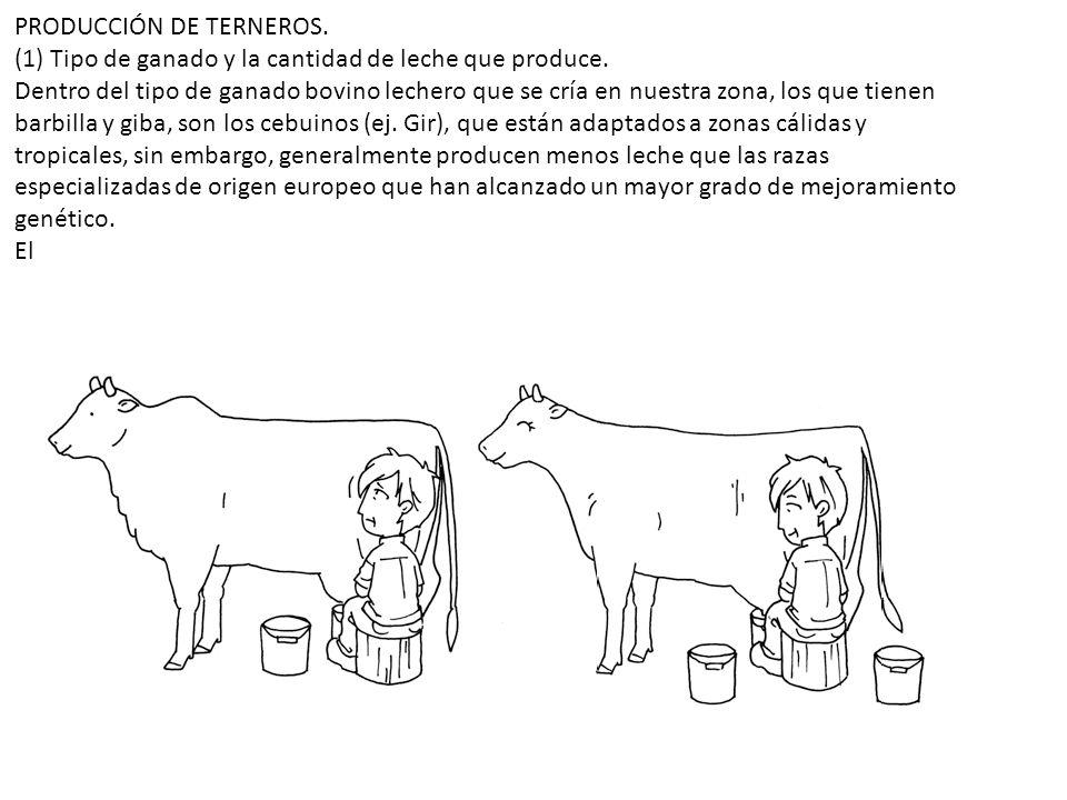 PRODUCCIÓN DE TERNEROS. (1) Tipo de ganado y la cantidad de leche que produce. Dentro del tipo de ganado bovino lechero que se cría en nuestra zona, l