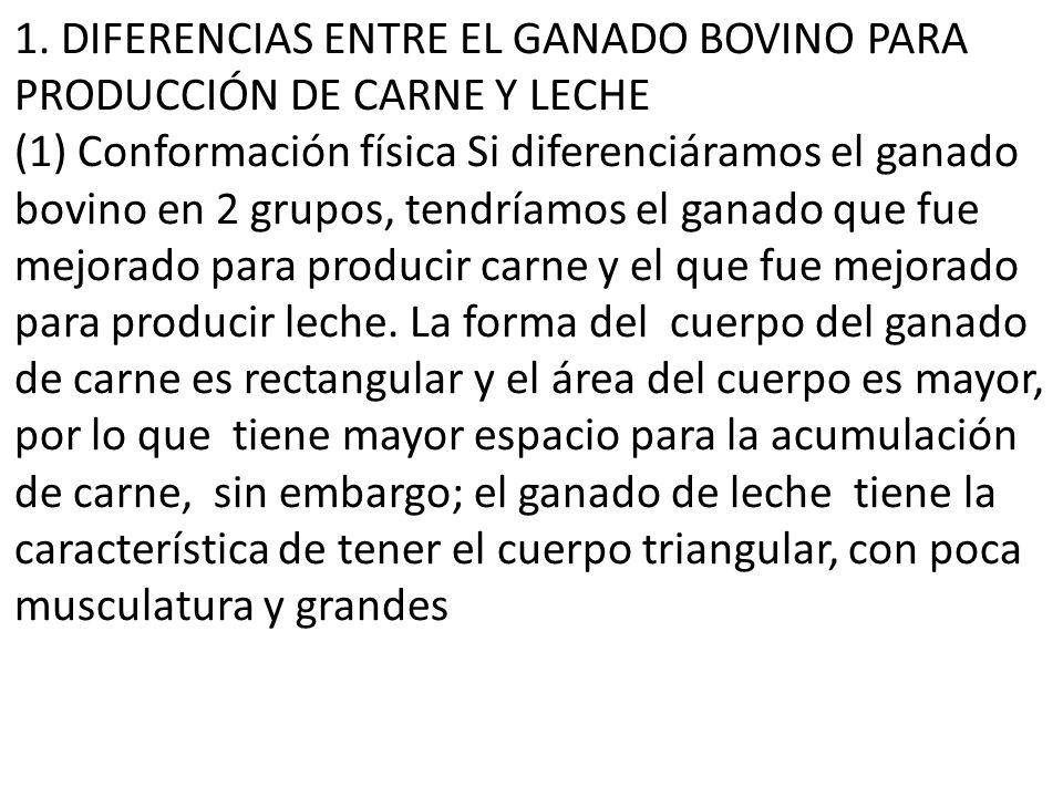 1. DIFERENCIAS ENTRE EL GANADO BOVINO PARA PRODUCCIÓN DE CARNE Y LECHE (1) Conformación física Si diferenciáramos el ganado bovino en 2 grupos, tendrí