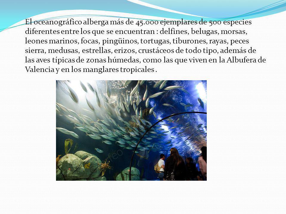 El oceanográfico alberga más de 45.000 ejemplares de 500 especies diferentes entre los que se encuentran : delfines, belugas, morsas, leones marinos, focas, pingüinos, tortugas, tiburones, rayas, peces sierra, medusas, estrellas, erizos, crustáceos de todo tipo, además de las aves típicas de zonas húmedas, como las que viven en la Albufera de Valencia y en los manglares tropicales.