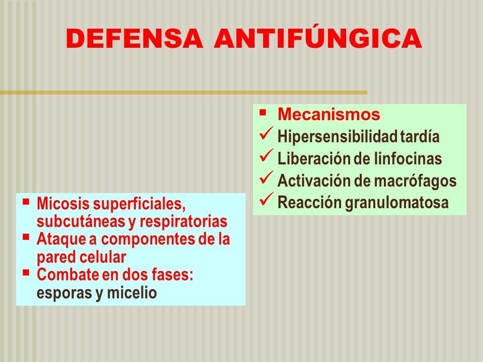 DEFENSA ANTIFÚNGICA Micosis superficiales, subcutáneas y respiratorias Ataque a componentes de la pared celular Combate en dos fases: esporas y miceli