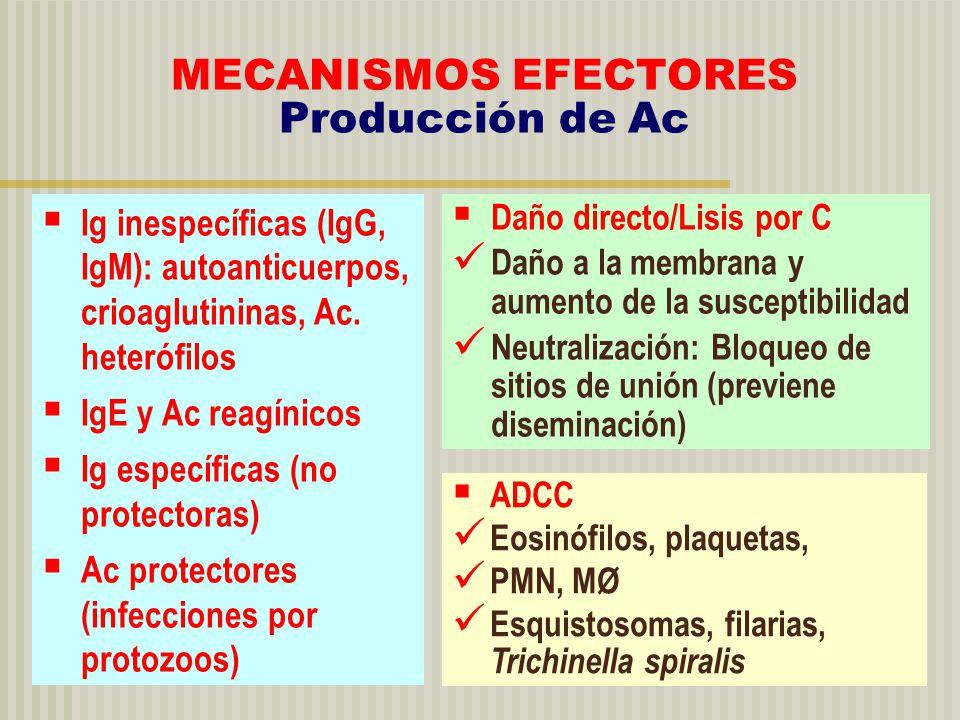 MECANISMOS EFECTORES Producción de Ac Ig inespecíficas (IgG, IgM): autoanticuerpos, crioaglutininas, Ac. heterófilos IgE y Ac reagínicos Ig específica