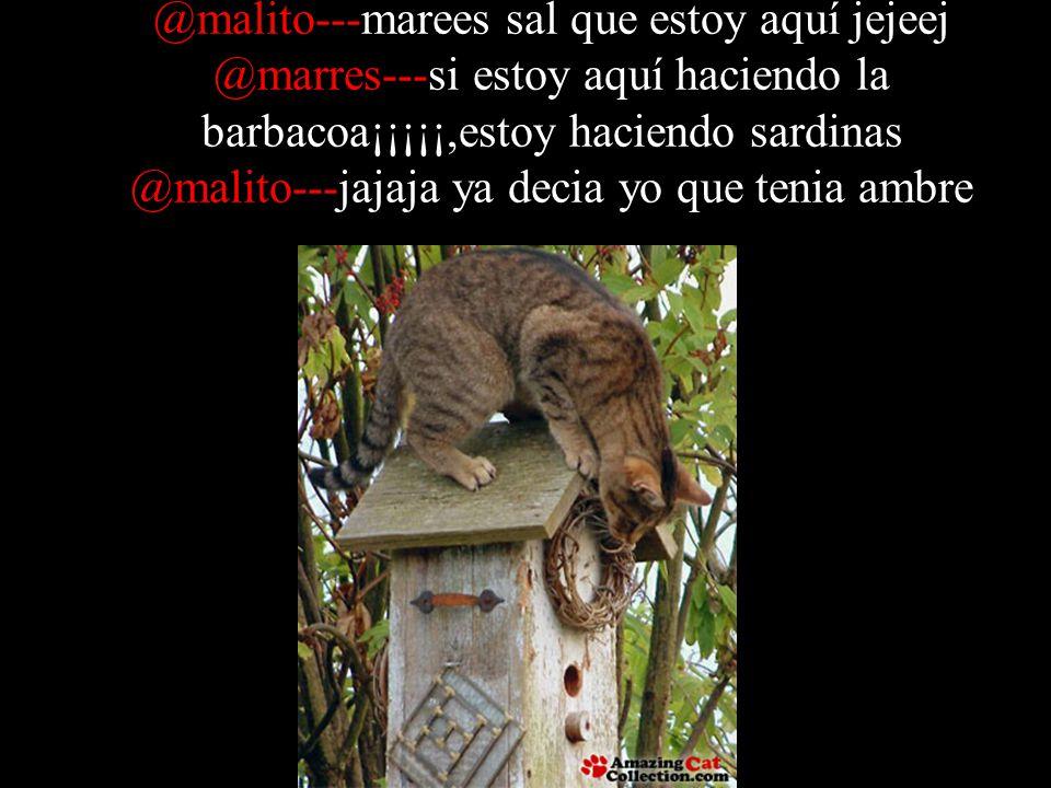 @malito---marees sal que estoy aquí jejeej @marres---si estoy aquí haciendo la barbacoa¡¡¡¡¡,estoy haciendo sardinas @malito---jajaja ya decia yo que tenia ambre