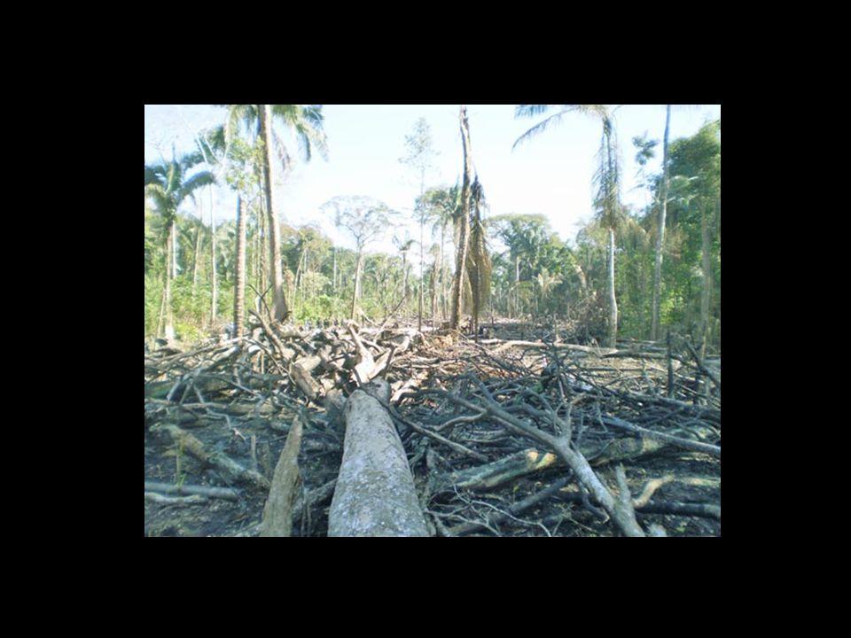 deforestar…