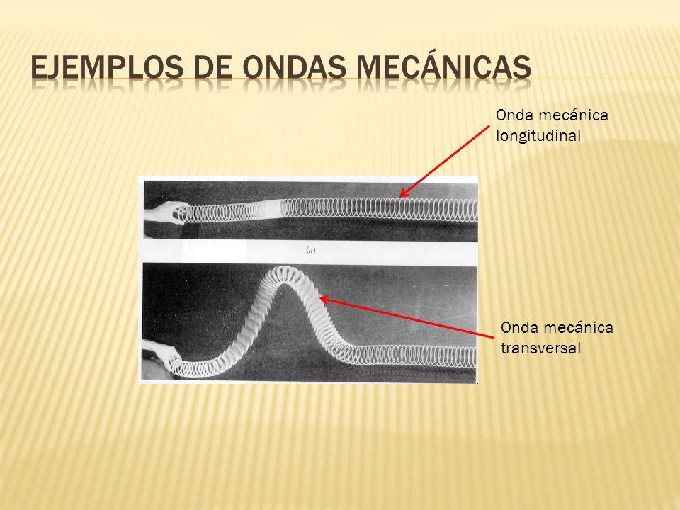 Onda mecánica longitudinal Onda mecánica transversal