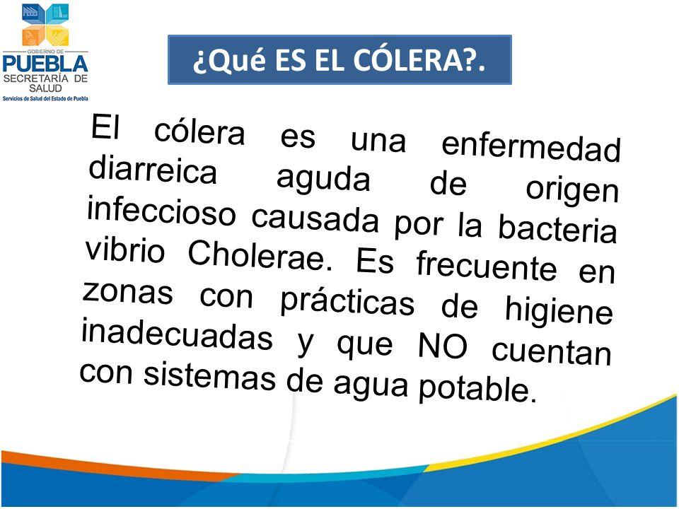 ¿Qué ES EL CÓLERA?.