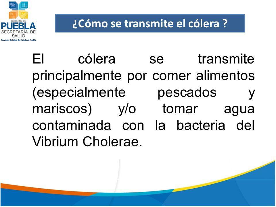 El cólera se transmite principalmente por comer alimentos (especialmente pescados y mariscos) y/o tomar agua contaminada con la bacteria del Vibrium Cholerae.