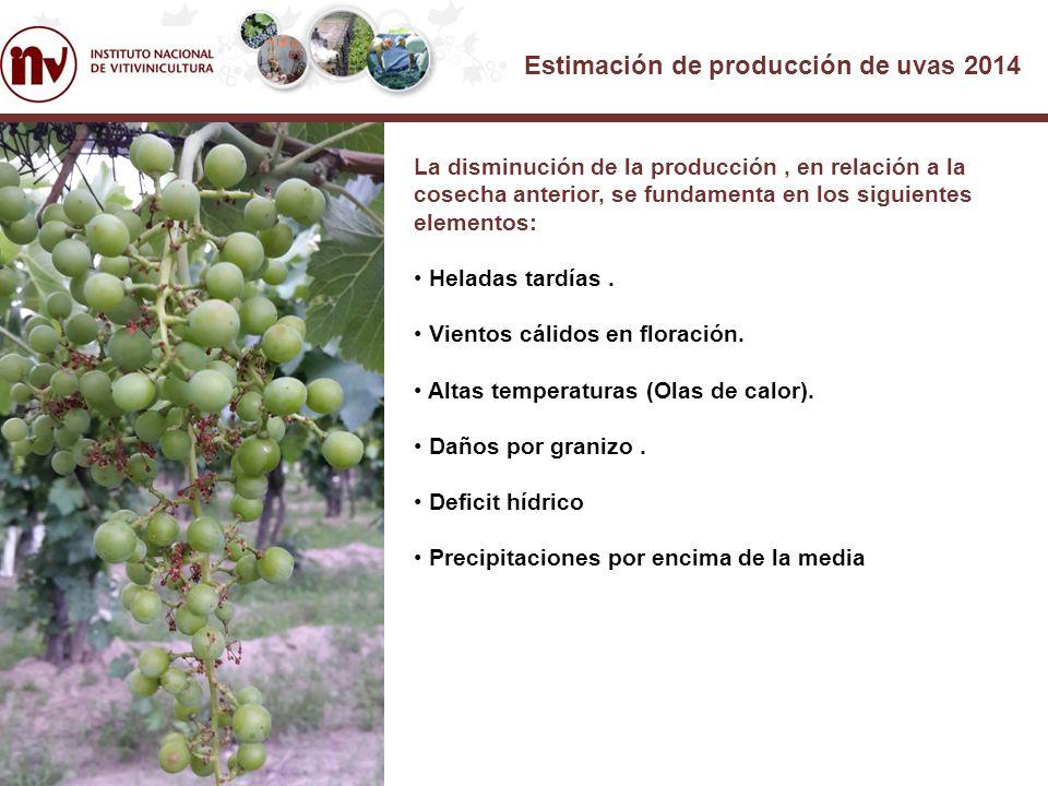 Estimación de producción de uvas 2014 La disminución de la producción, en relación a la cosecha anterior, se fundamenta en los siguientes elementos: Heladas tardías.