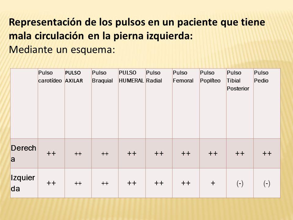 Pulso carotídeo PULSO AXILAR Pulso Braquial PULSO HUMERAL Pulso Radial Pulso Femoral Pulso Poplíteo Pulso Tibial Posterior Pulso Pedio Derech a ++ Izquier da ++ +(-) Representación de los pulsos en un paciente que tiene mala circulación en la pierna izquierda: Mediante un esquema: