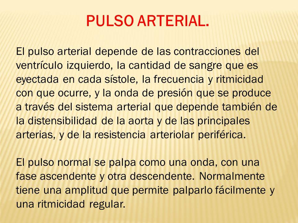 PULSO ARTERIAL. El pulso arterial depende de las contracciones del ventrículo izquierdo, la cantidad de sangre que es eyectada en cada sístole, la fre
