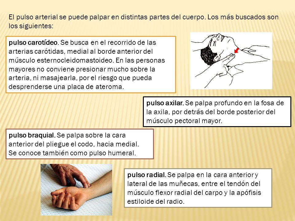 El pulso arterial se puede palpar en distintas partes del cuerpo. Los más buscados son los siguientes: pulso carotídeo. Se busca en el recorrido de la