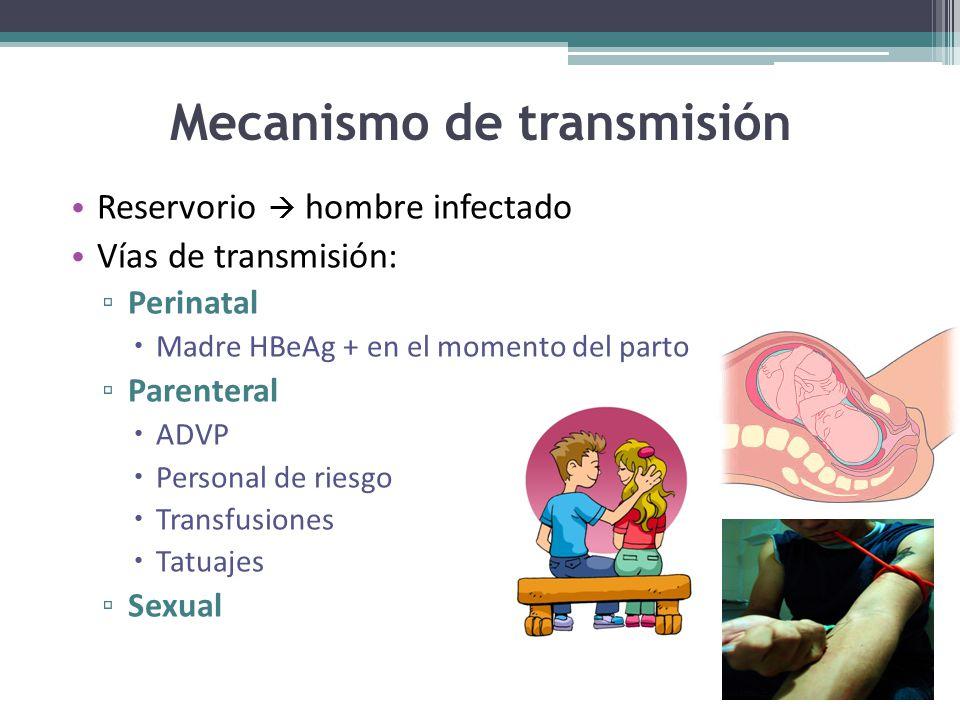 Mecanismo de transmisión Reservorio hombre infectado Vías de transmisión: Perinatal Madre HBeAg + en el momento del parto Parenteral ADVP Personal de