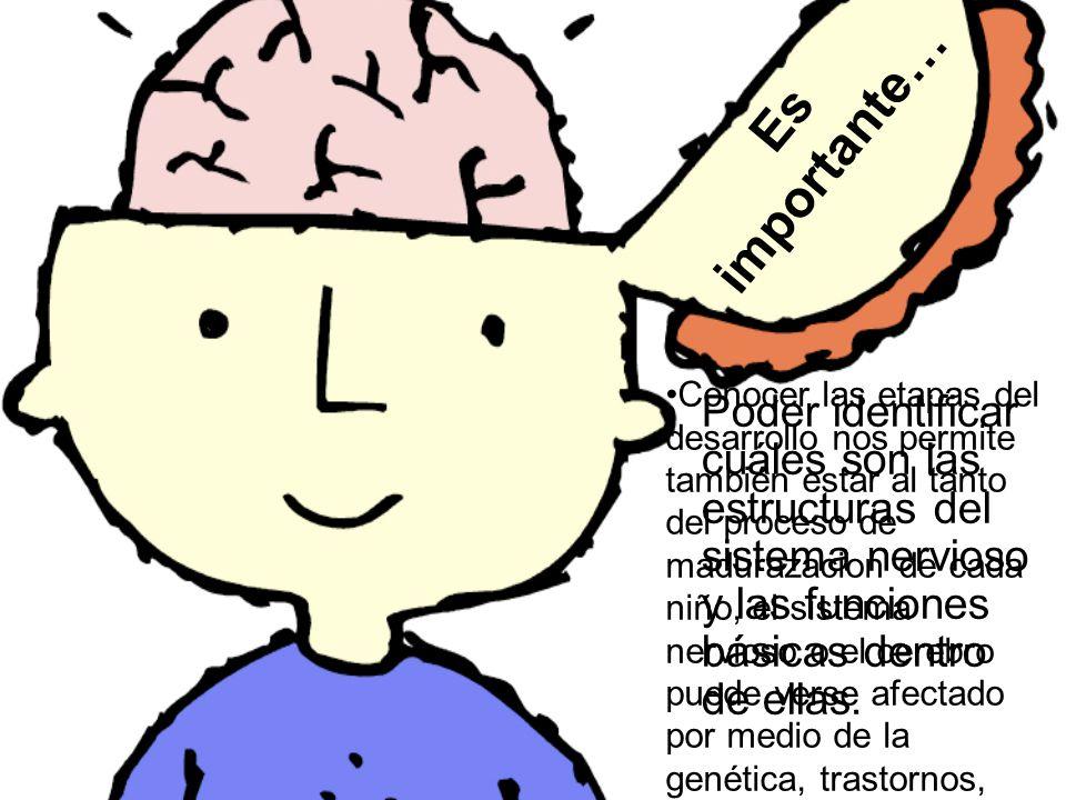 Es importante… Poder identificar cuáles son las estructuras del sistema nervioso y las funciones básicas dentro de ellas. Conocer las etapas del desar