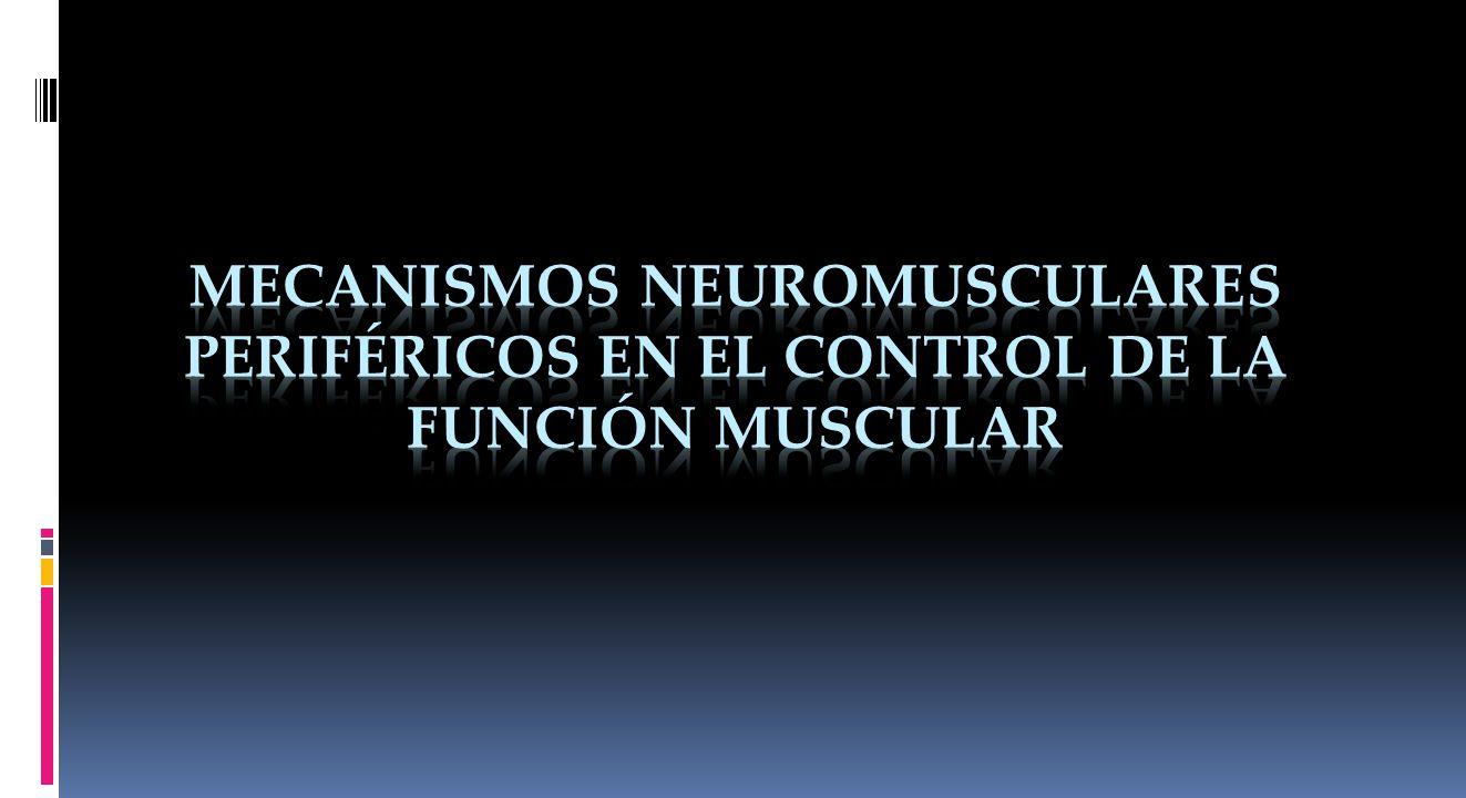 Sistema Neuromuscular Músculos. Estructuras neurológicas.