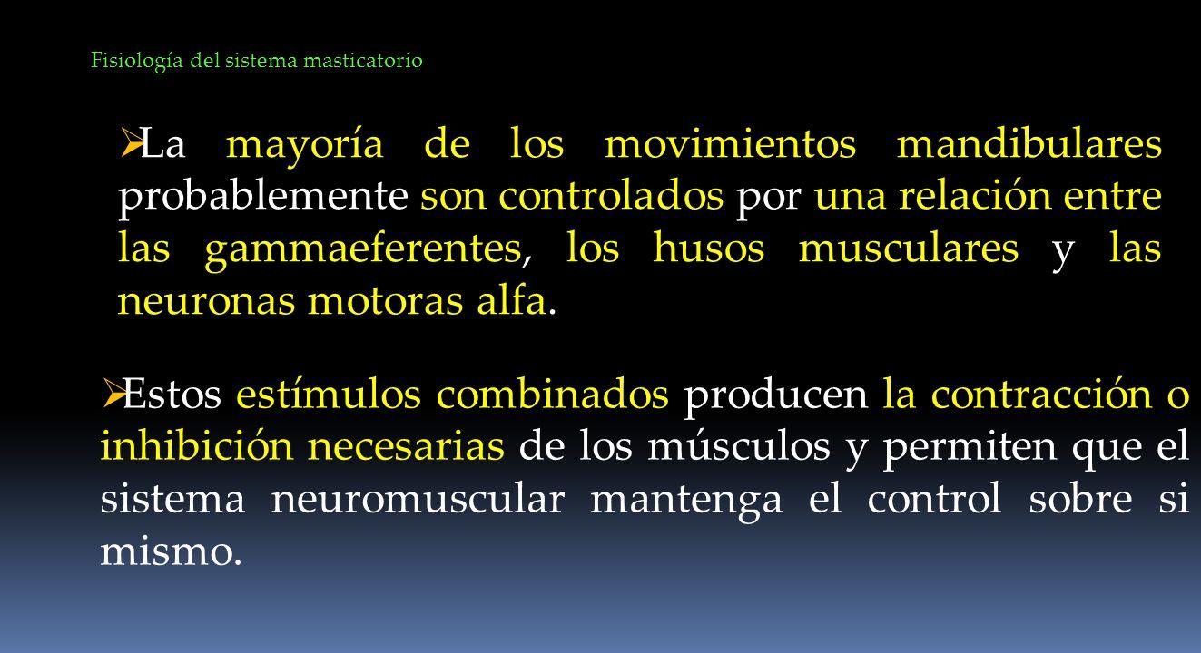 La mayoría de los movimientos mandibulares probablemente son controlados por una relación entre las gammaeferentes, los husos musculares y las neurona