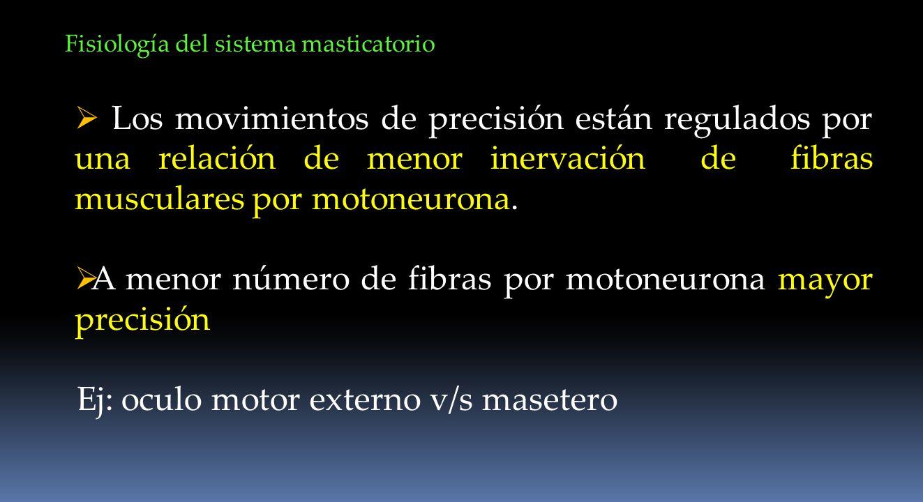 Fisiología del sistema masticatorio Los movimientos de precisión están regulados por una relación de menor inervación de fibras musculares por motoneu