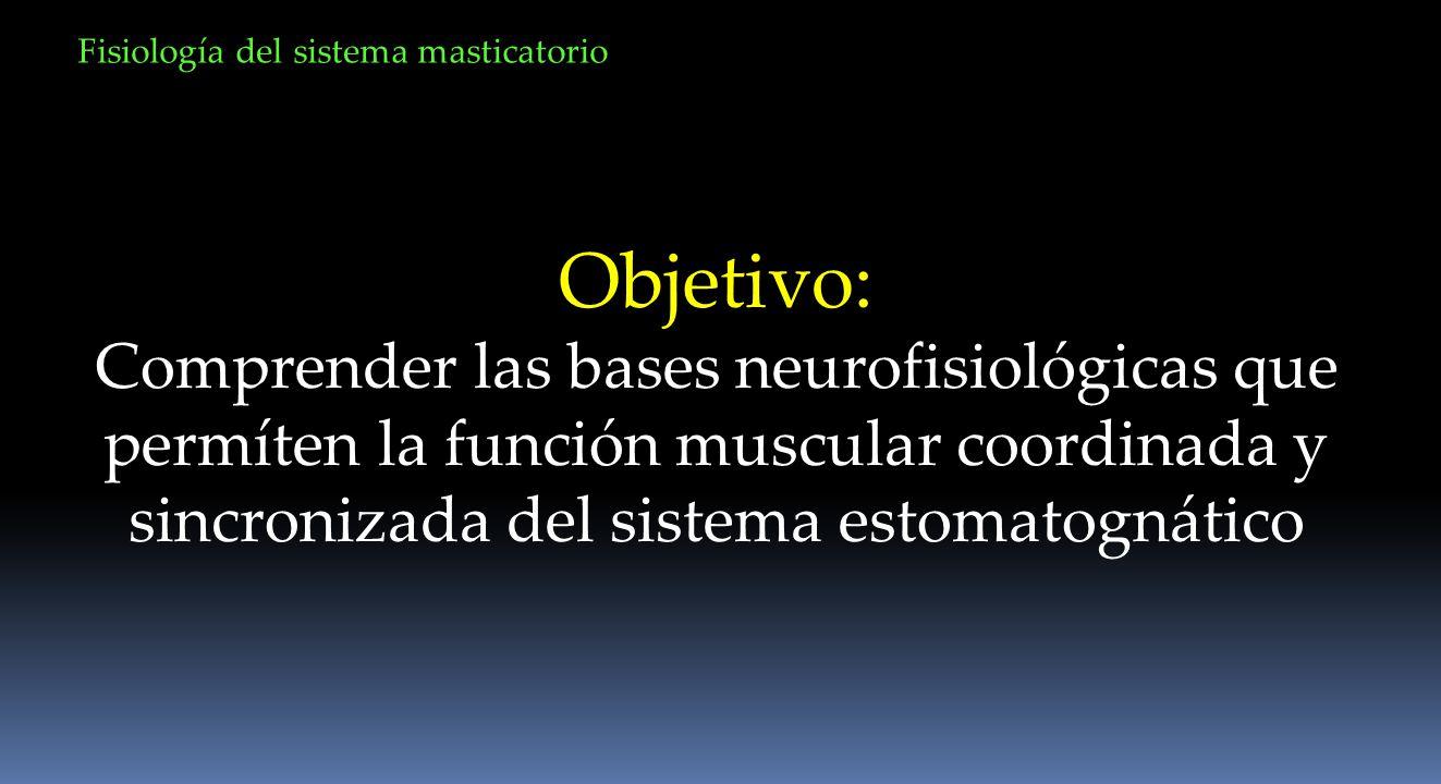 Objetivo: Comprender las bases neurofisiológicas que permíten la función muscular coordinada y sincronizada del sistema estomatognático Fisiología del