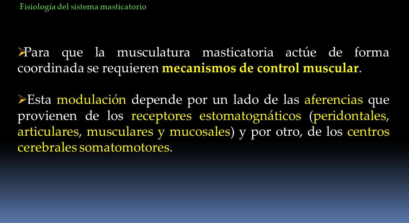 Para que la musculatura masticatoria actúe de forma coordinada se requieren mecanismos de control muscular. Esta modulación depende por un lado de las