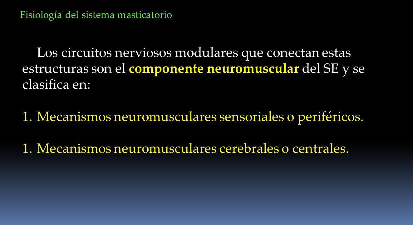Los circuitos nerviosos modulares que conectan estas estructuras son el componente neuromuscular del SE y se clasifica en: 1.Mecanismos neuromusculare