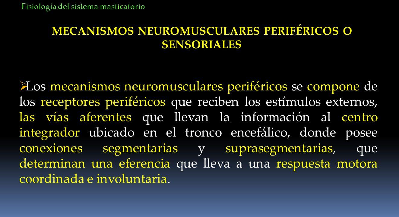 MECANISMOS NEUROMUSCULARES PERIFÉRICOS O SENSORIALES Los mecanismos neuromusculares periféricos se compone de los receptores periféricos que reciben l