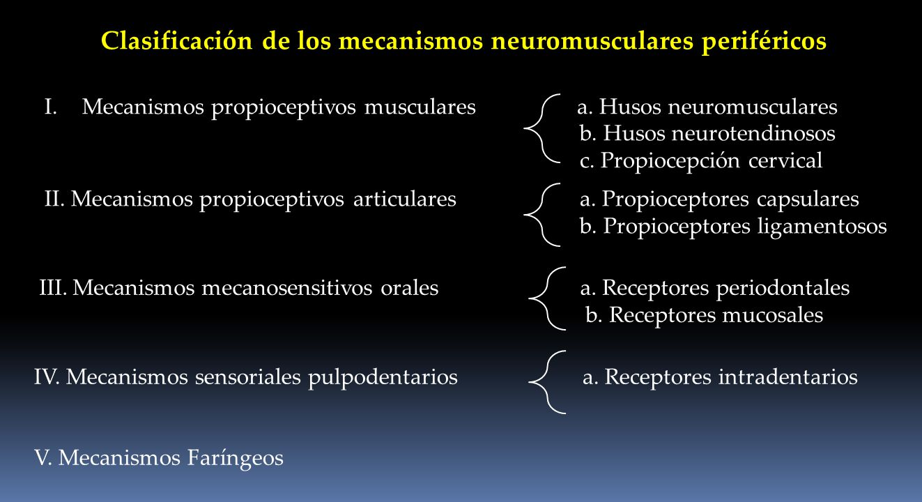 Clasificación de los mecanismos neuromusculares periféricos I.Mecanismos propioceptivos musculares a. Husos neuromusculares b. Husos neurotendinosos c