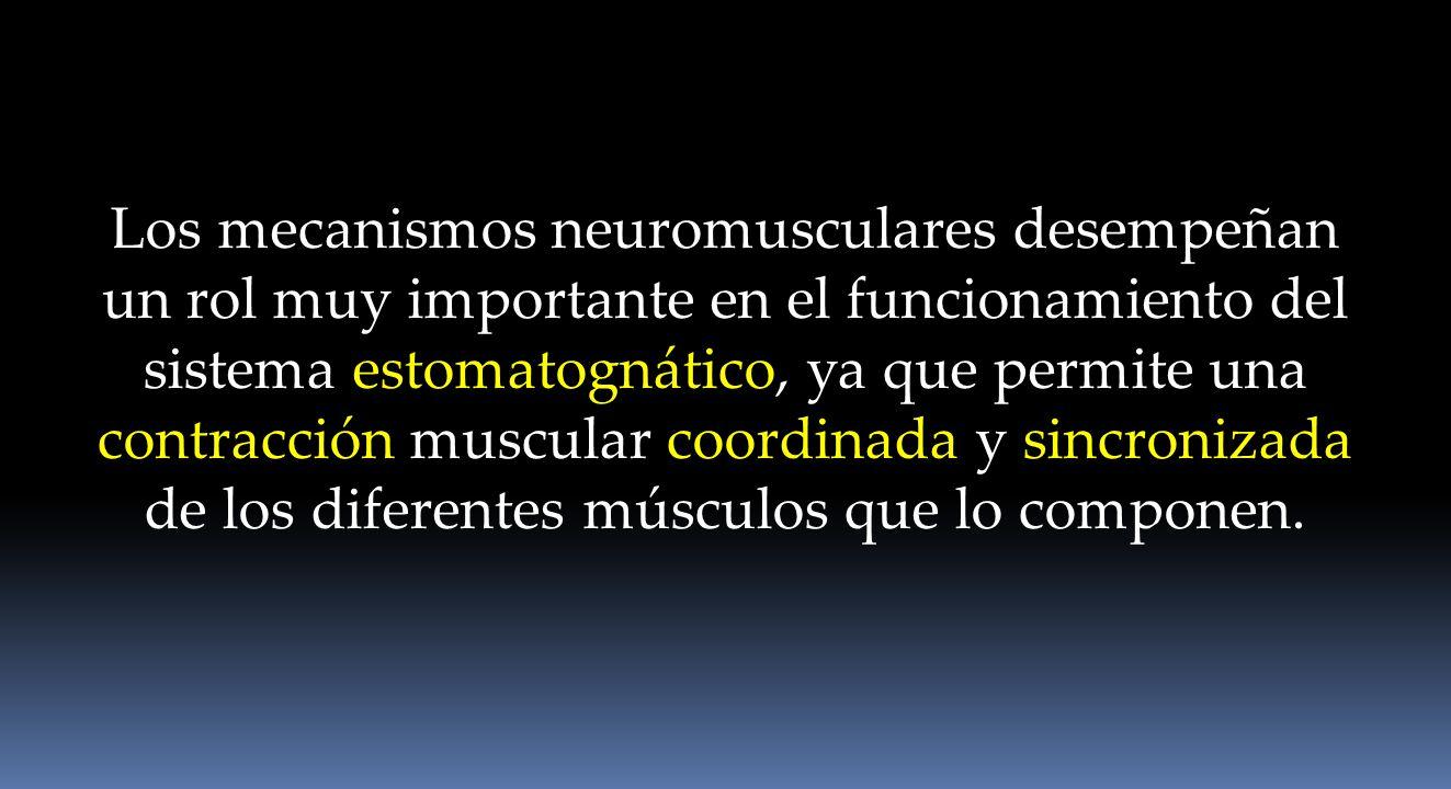 Los mecanismos neuromusculares desempeñan un rol muy importante en el funcionamiento del sistema estomatognático, ya que permite una contracción muscu