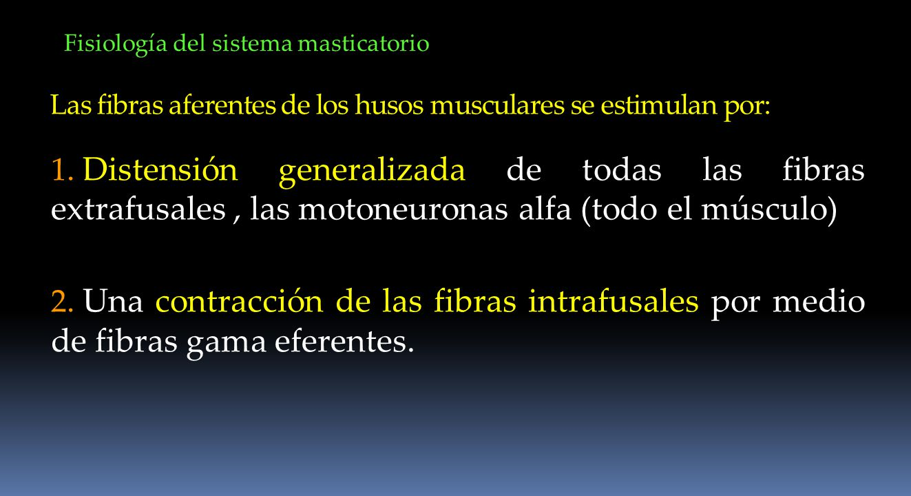 Fisiología del sistema masticatorio Las fibras aferentes de los husos musculares se estimulan por: 1. Distensión generalizada de todas las fibras extr
