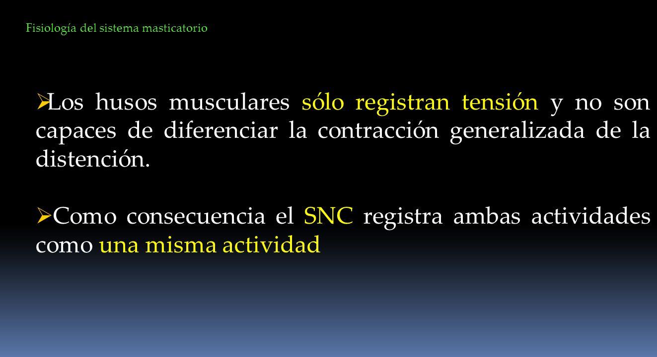 Los husos musculares sólo registran tensión y no son capaces de diferenciar la contracción generalizada de la distención. Como consecuencia el SNC reg