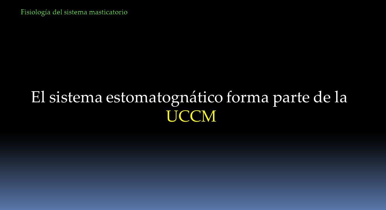 Fisiología del sistema masticatorio Unidad motora
