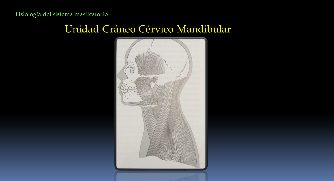 Unidad Cráneo Cérvico Mandibular