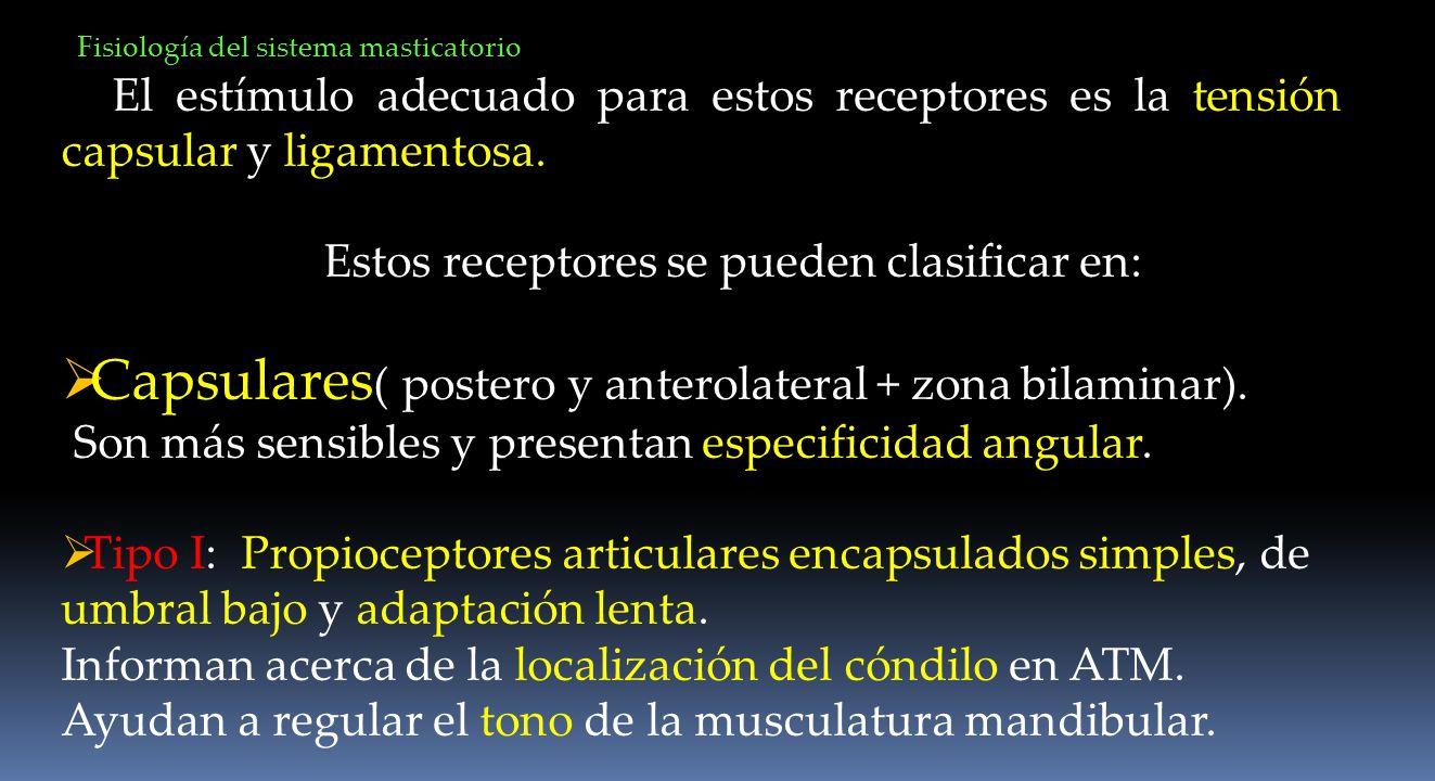 El estímulo adecuado para estos receptores es la tensión capsular y ligamentosa. Estos receptores se pueden clasificar en: Capsulares ( postero y ante