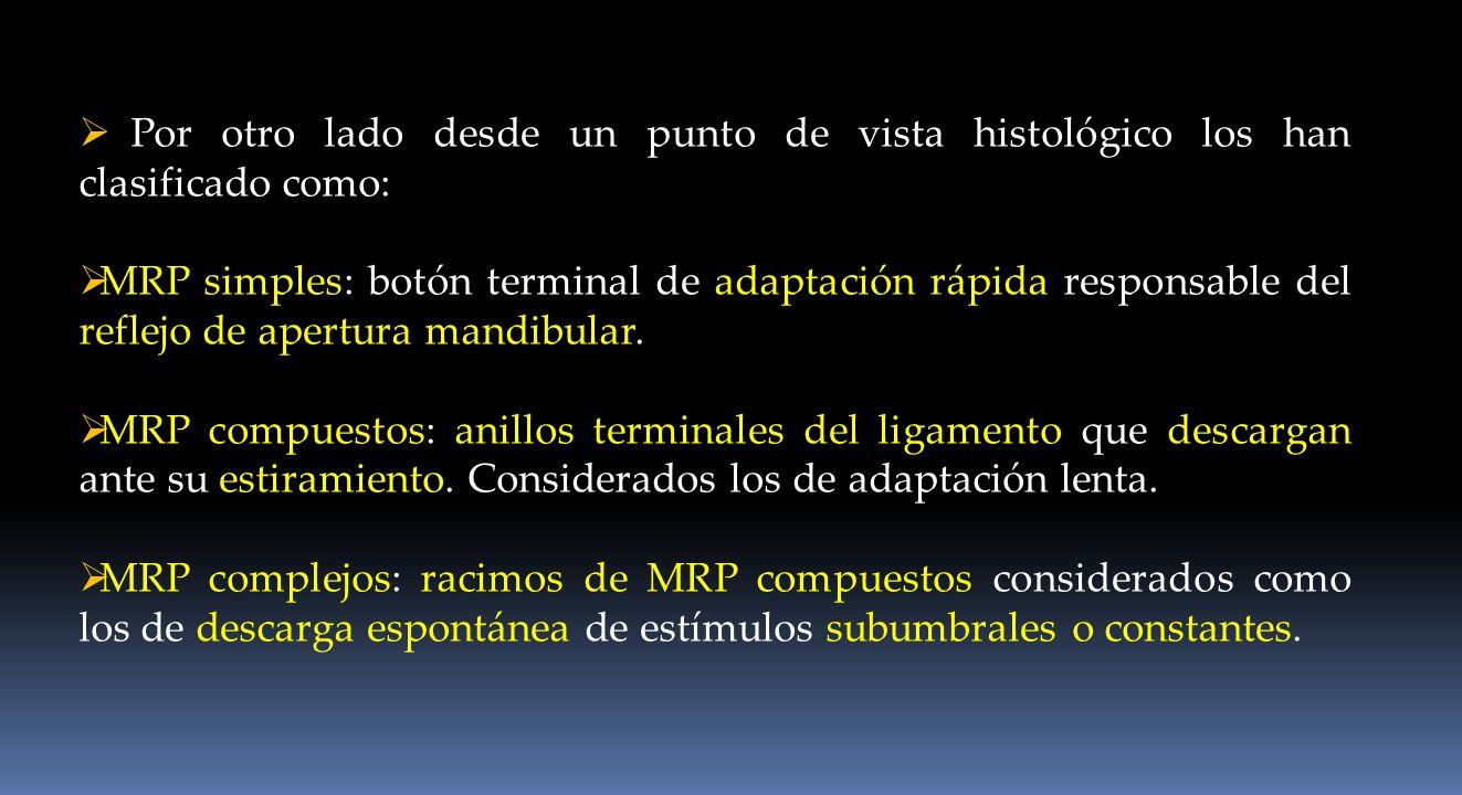 Por otro lado desde un punto de vista histológico los han clasificado como: MRP simples: botón terminal de adaptación rápida responsable del reflejo d