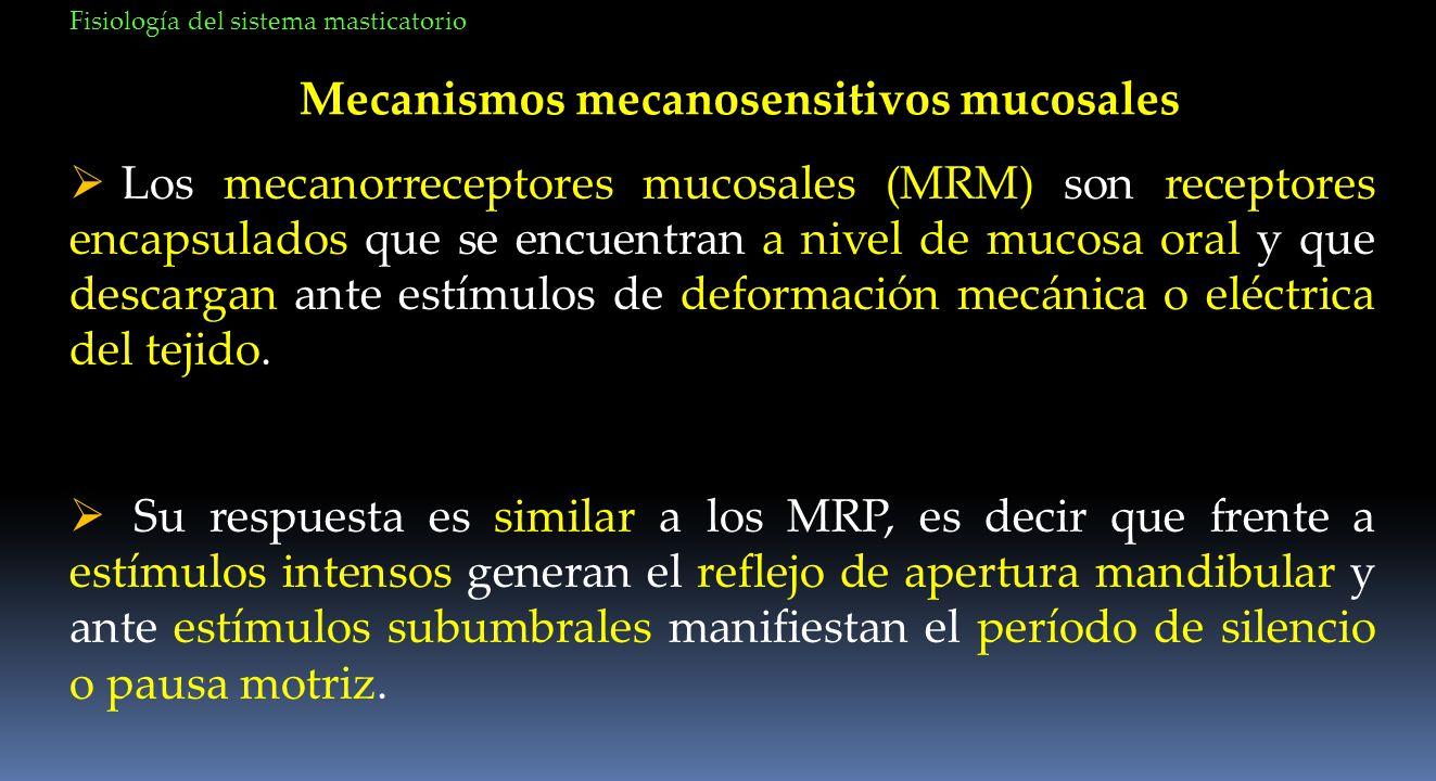 Mecanismos mecanosensitivos mucosales Los mecanorreceptores mucosales (MRM) son receptores encapsulados que se encuentran a nivel de mucosa oral y que