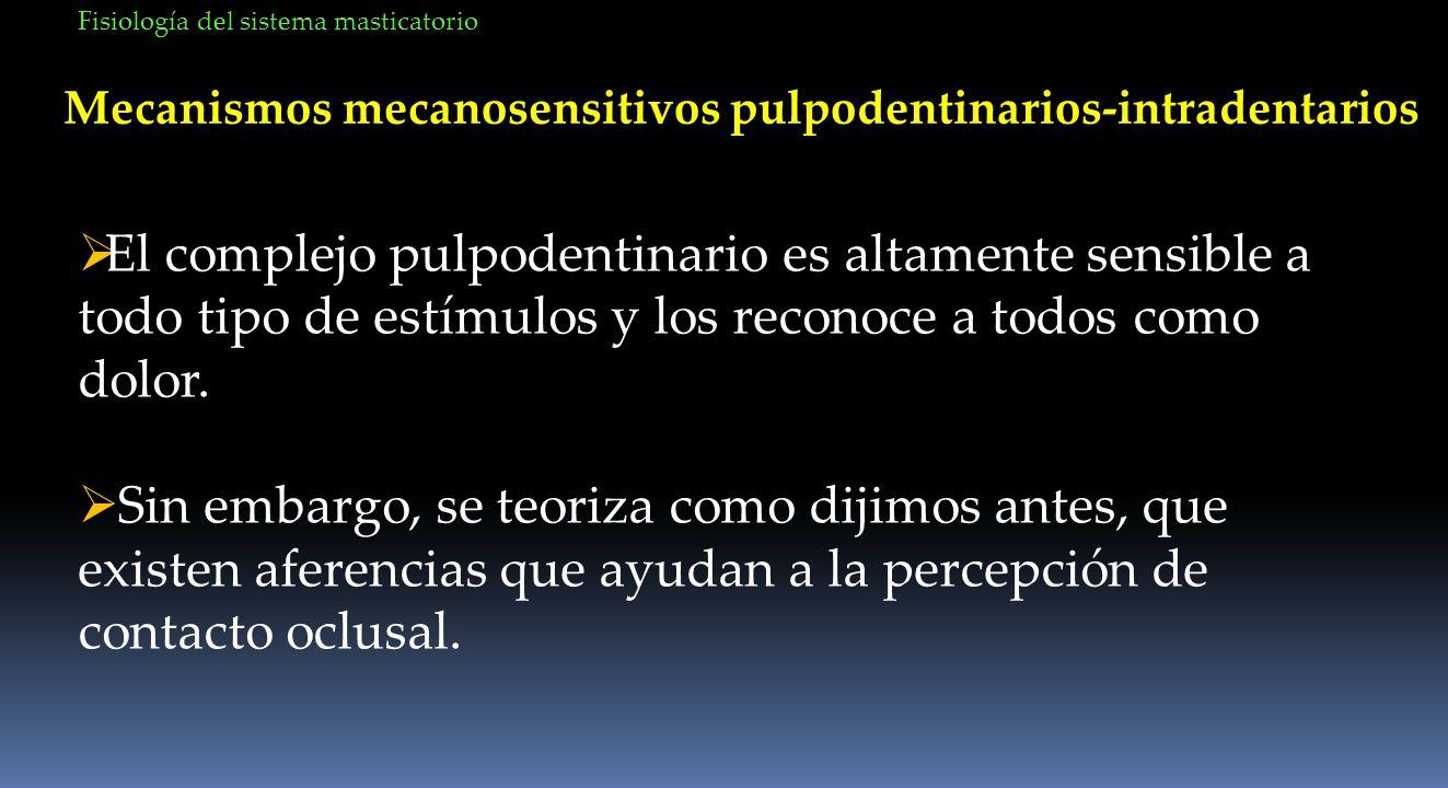 Mecanismos mecanosensitivos pulpodentinarios-intradentarios El complejo pulpodentinario es altamente sensible a todo tipo de estímulos y los reconoce