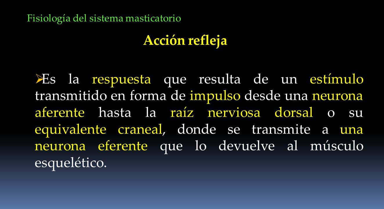Acción refleja Es la respuesta que resulta de un estímulo transmitido en forma de impulso desde una neurona aferente hasta la raíz nerviosa dorsal o s