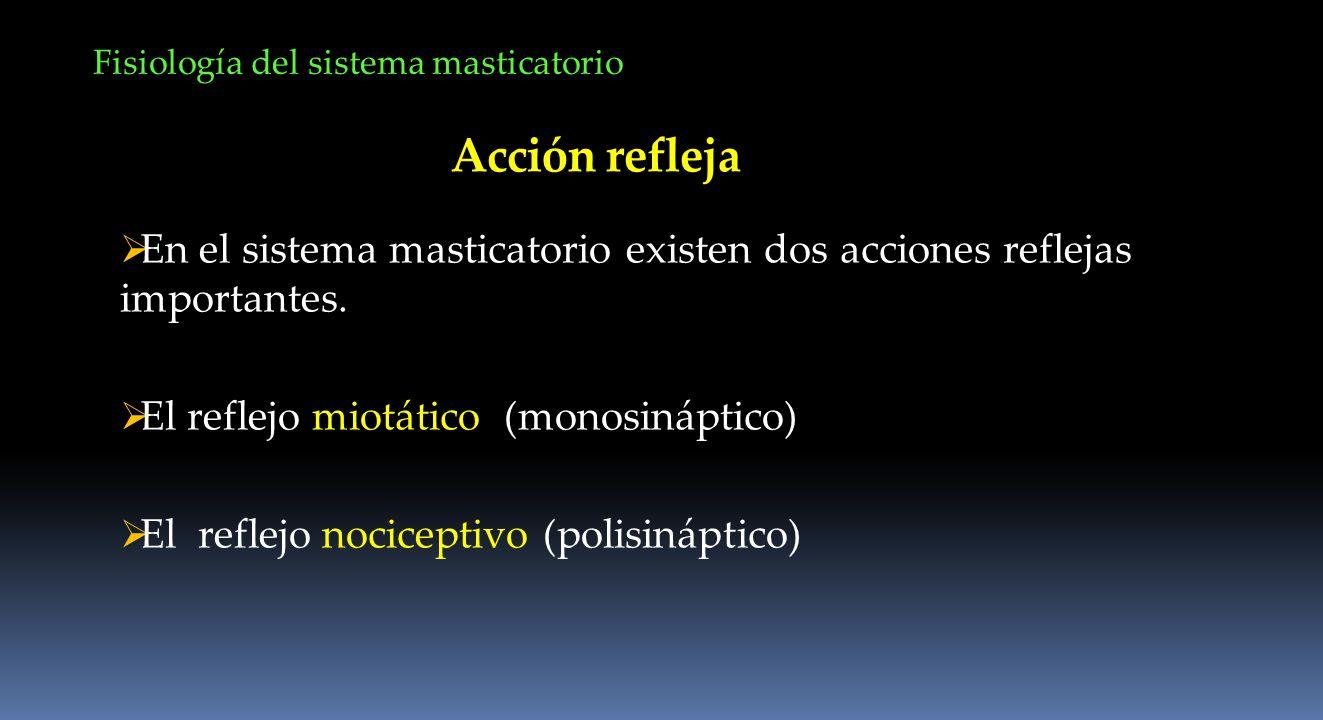 Acción refleja En el sistema masticatorio existen dos acciones reflejas importantes. El reflejo miotático (monosináptico) El reflejo nociceptivo (poli