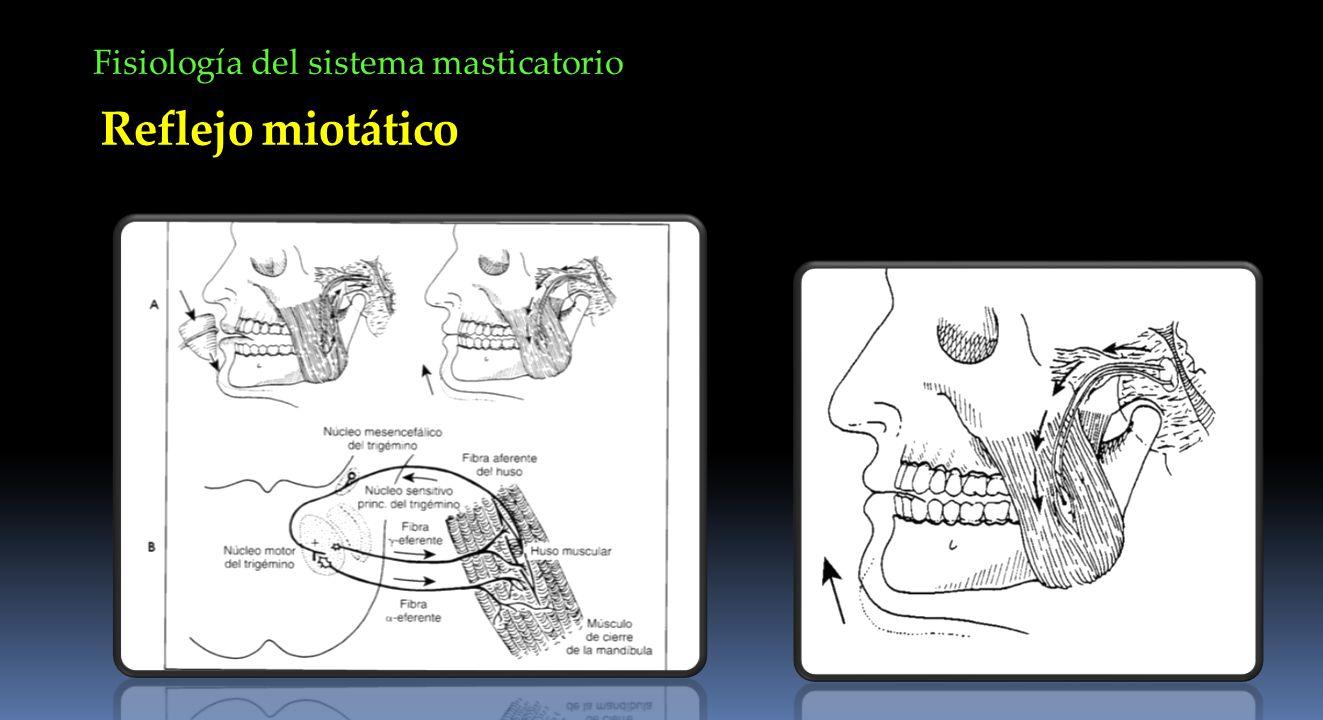 Fisiología del sistema masticatorio Reflejo miotático