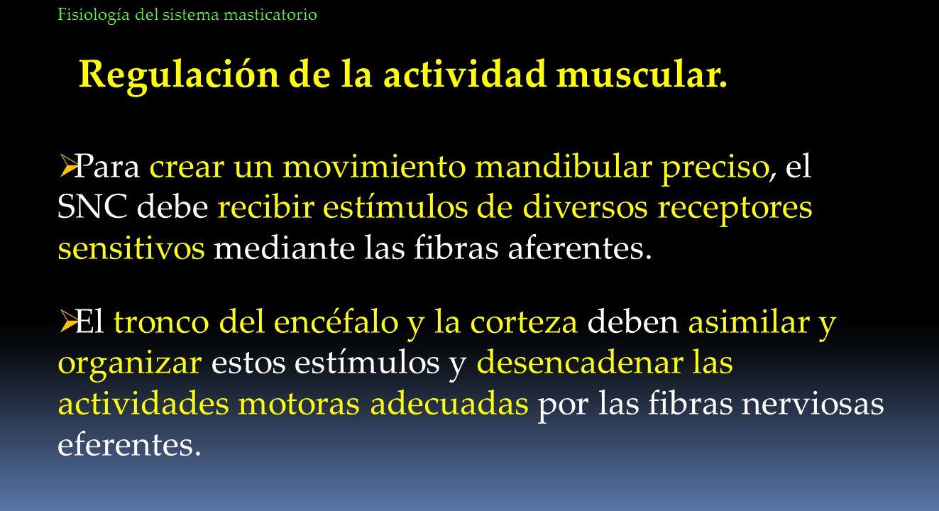 Regulación de la actividad muscular. Para crear un movimiento mandibular preciso, el SNC debe recibir estímulos de diversos receptores sensitivos medi