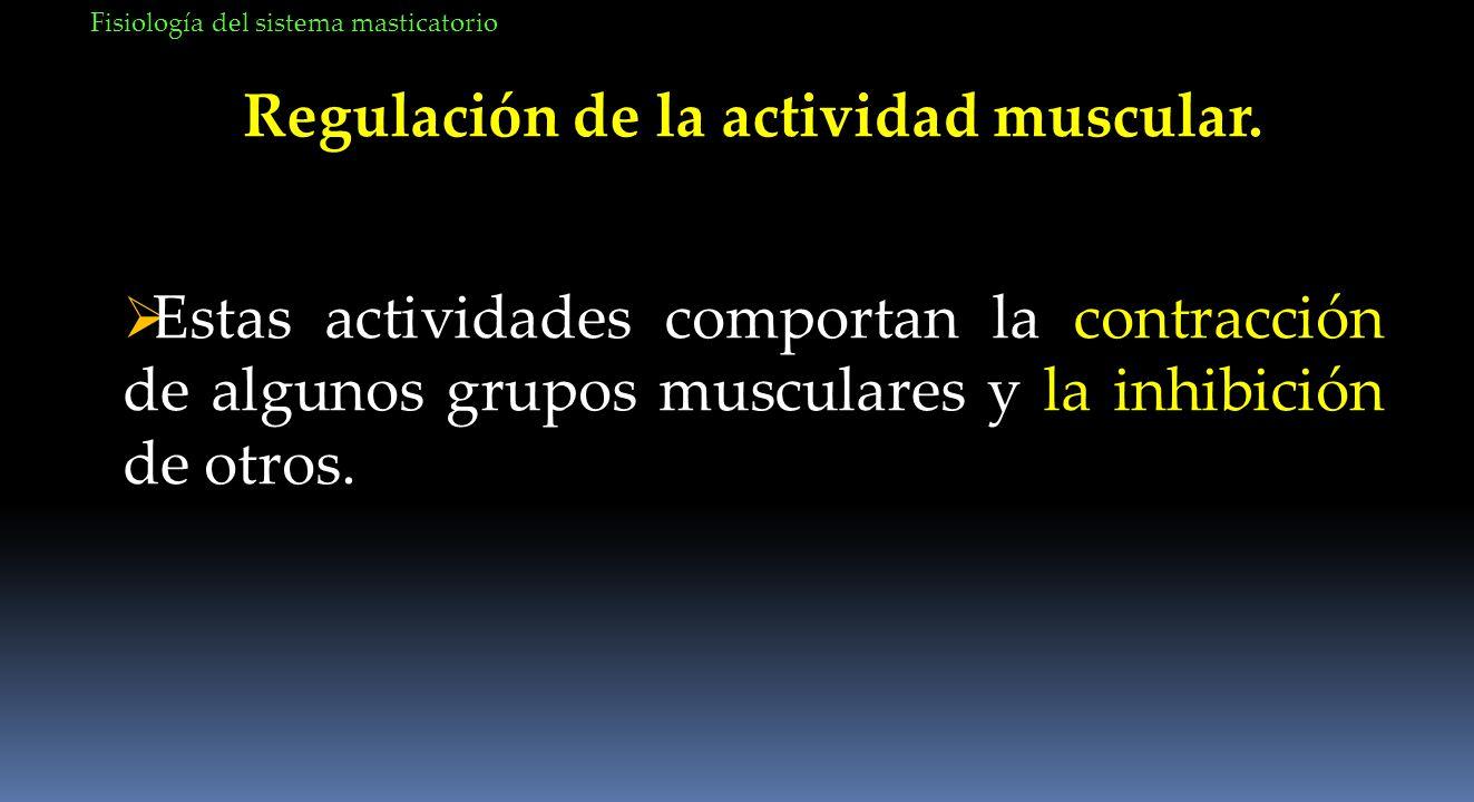 Fisiología del sistema masticatorio Regulación de la actividad muscular. Estas actividades comportan la contracción de algunos grupos musculares y la
